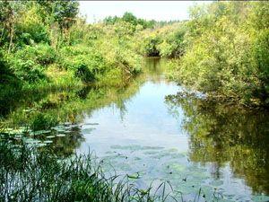 Панкрушихинский р-он, река Бурла