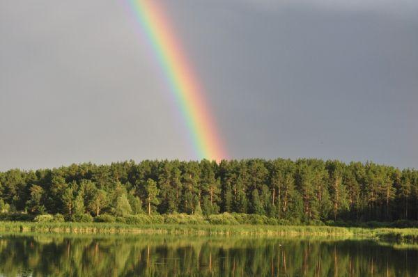 Бурлинский ленточный бор. Озеро Большое