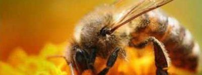 «Пчелы, мед, пасека»