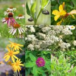 «Аптекарский огород: целебные свойства растений»