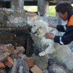 «Открытая библиосреда»: человек собаке друг