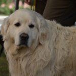 «Открытая библиосреда»: как прочитать собаку
