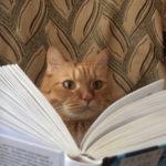 «Шишковка» объявляет фотоконкурс про котиков и книги